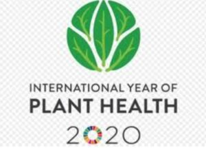International year of Planth health 2020